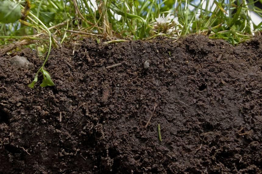 healthy-soils.jpg.860x0_q70_crop-scale